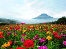 「美しく豊かな自然を求めて・山中湖」